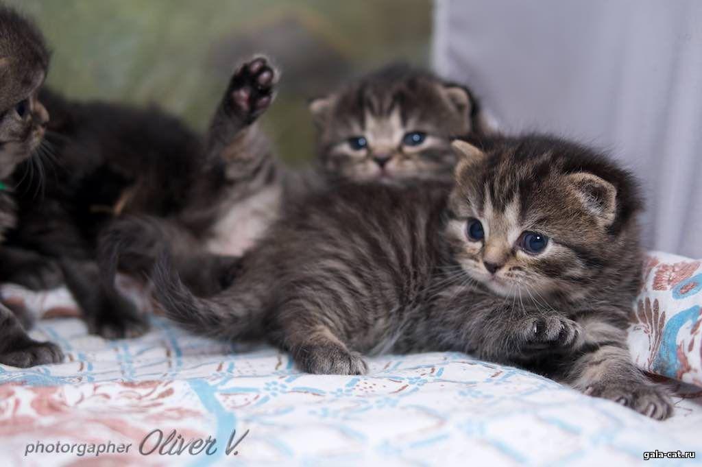 нашли картинки котят три недели хну для росписи