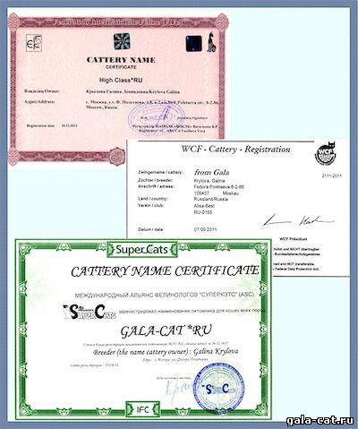Сертификаты питомника gala-cat.ru